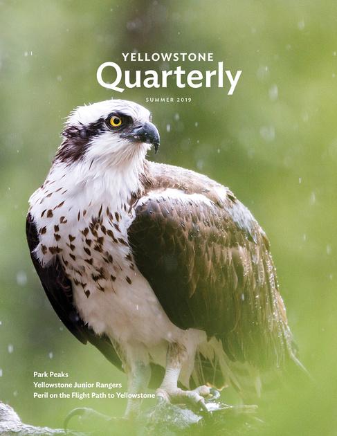 Yellowstone Quarterly Magazine Cover Summer 2019